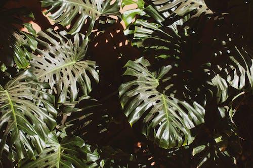 Ilmainen kuvapankkikuva tunnisteilla kontrasti, lähikuva, lehdet, maisema