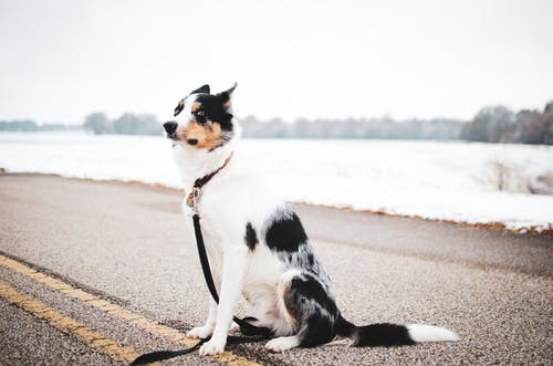 Short-coated White and Black Dog Sitting on Road Near Body of Water