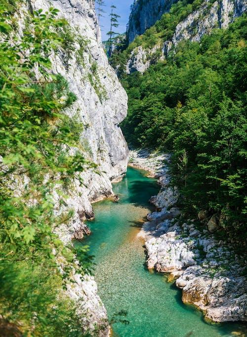 Foto d'estoc gratuïta de a l'aire lliure, aigua, arbres, corrent
