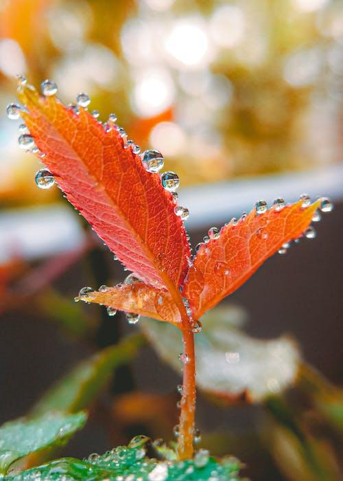 Безкоштовне стокове фото на тему «HD шпалери, великий план, дощова крапля, краплі води»