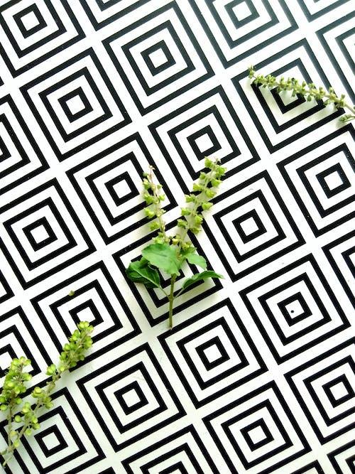 Darmowe zdjęcie z galerii z geometria, geometryczny, kształty, powierzchnia