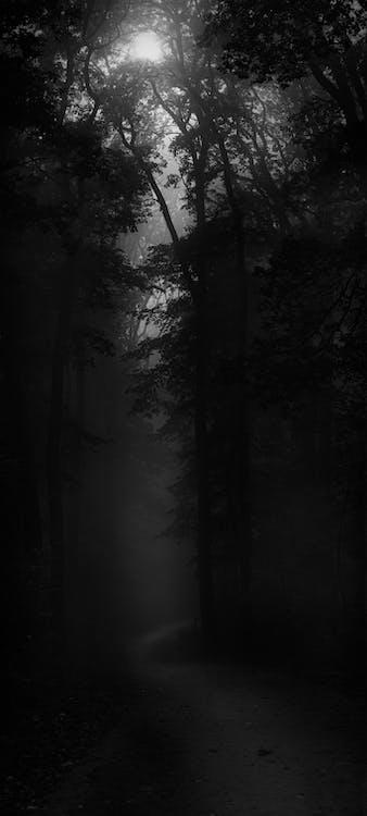 bomen, Bos, bossen