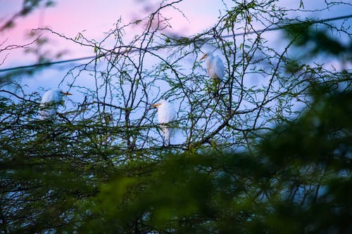 Základová fotografie zdarma na téma ptáci, rajky