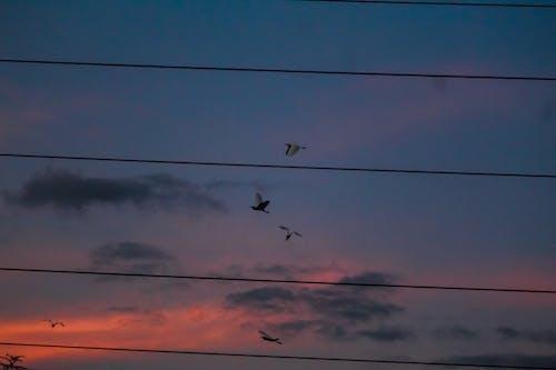 Základová fotografie zdarma na téma ptáci, rajky, večerní obloha