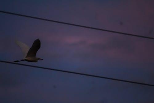 Základová fotografie zdarma na téma hejno ptáků, ptáci, pták, rajky