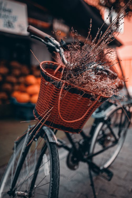 Parked Bike With Basket of Plant
