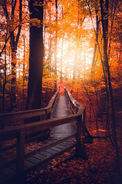 Walkway in Autumn Forest