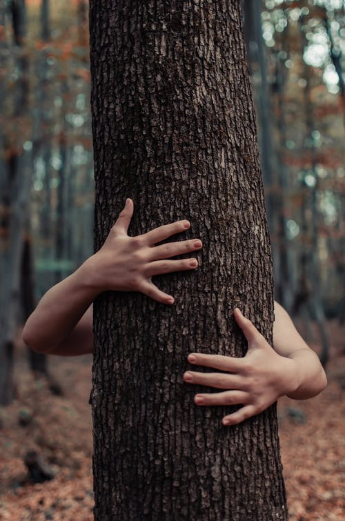 Person's Hand on Tree Trunk