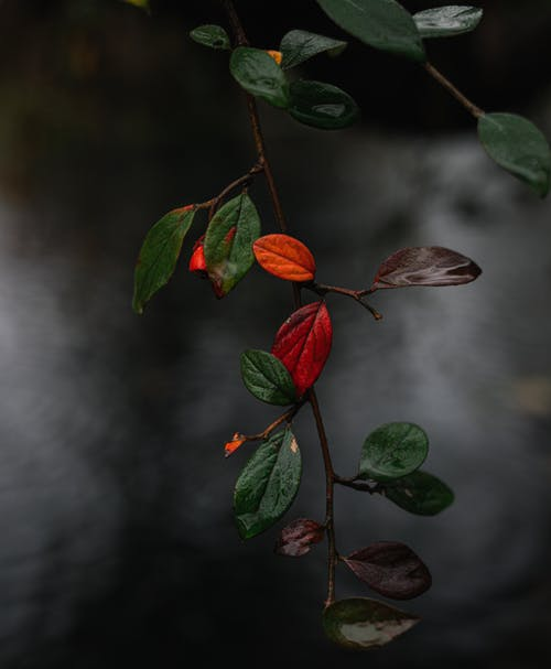 Branch with multicolored leaves over lake