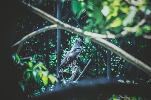 Free stock photo of bird of prey