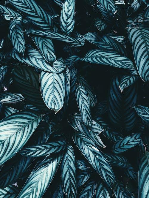 廠, 植物, 樹葉, 綠色 的 免費圖庫相片