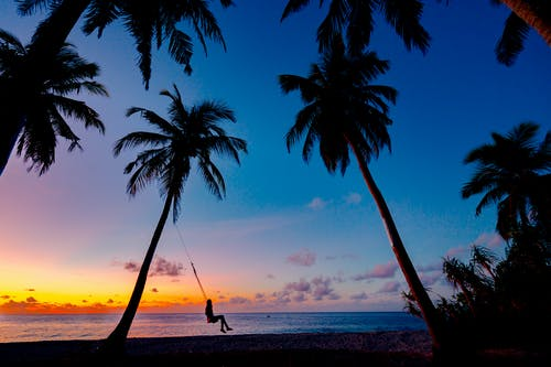 Gratis stockfoto met bomen, dageraad, eiland, kokospalmen