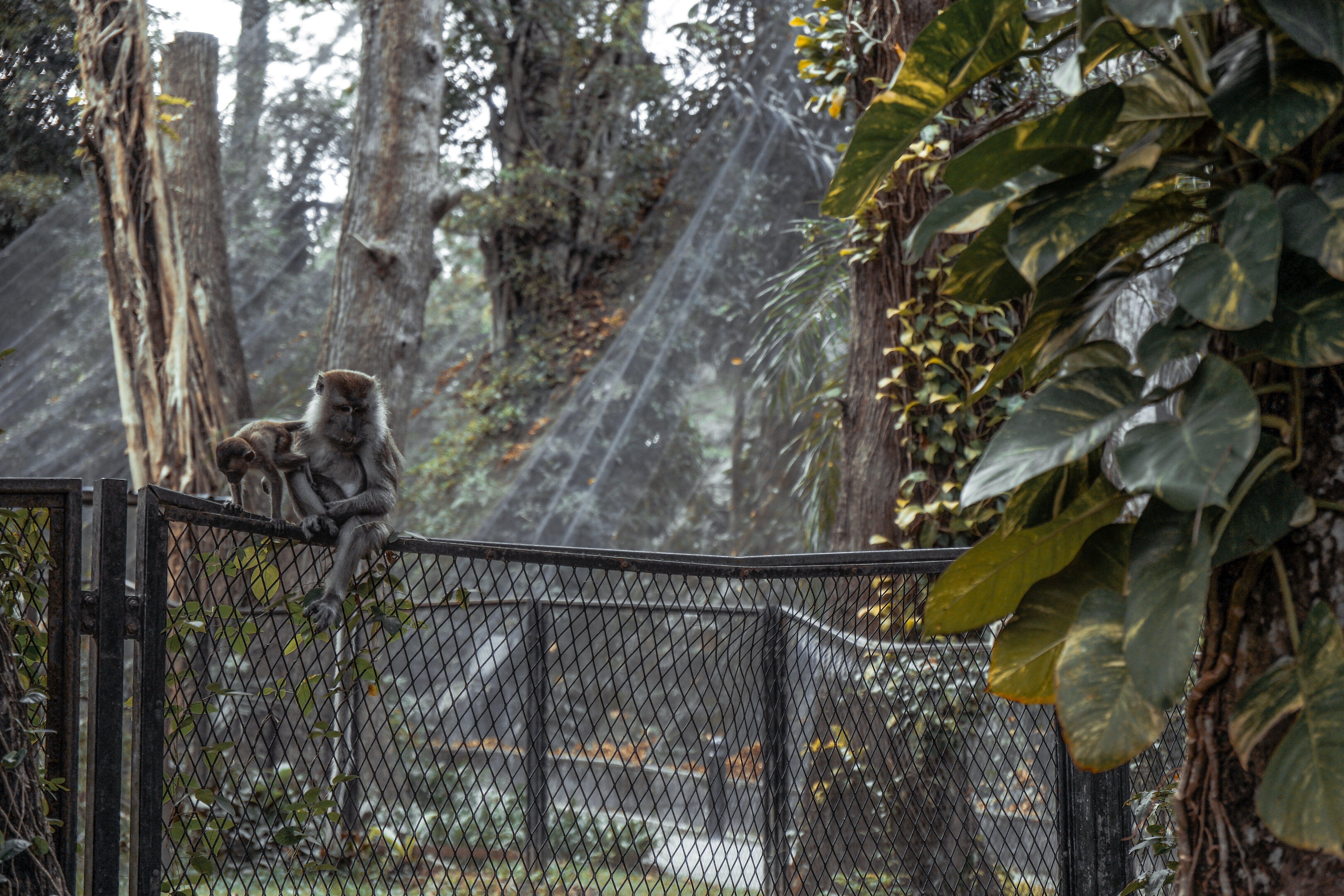 Gray Monkey Sitting on Fence