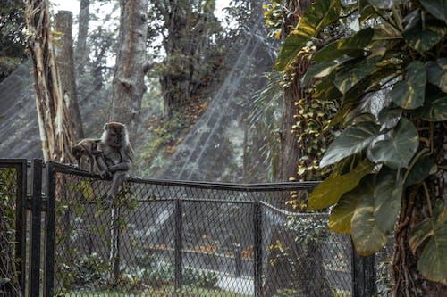 Základová fotografie zdarma na téma divočina, lézt, opice, park