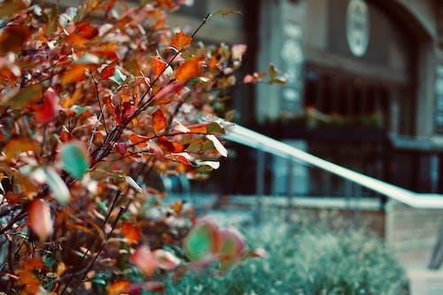 Foto d'estoc gratuïta de caure, chicago, ciutat, colors de tardor