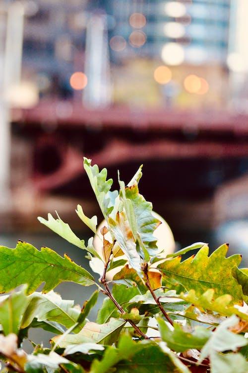 Foto d'estoc gratuïta de caure, color tardor, colors de tardor, fulles