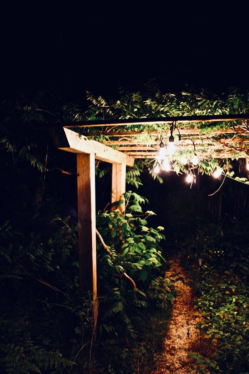 Foto d'estoc gratuïta de enreixat, fulles, jardí, llums del jardí