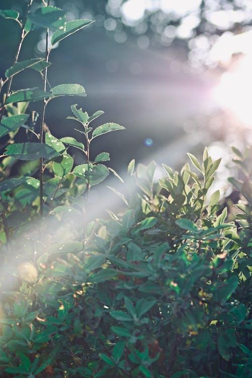 Foto d'estoc gratuïta de #outdoorchallenge, estiu, fulles, llum del sol