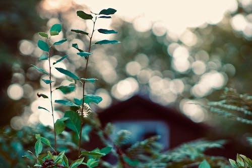 Foto d'estoc gratuïta de a l'aire lliure, estiu, fulles, natura