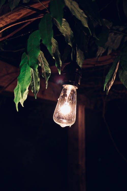 Foto d'estoc gratuïta de bombeta, fulles, fulles verdes, il·luminar