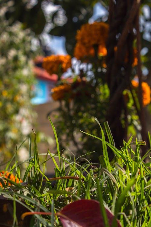 樹, 樹木, 草 的 免費圖庫相片