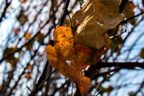 秋天心情森林 的 免費圖庫相片