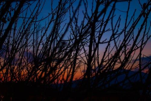傍晚天空, 傍晚的天空, 死樹, 美麗的天空 的 免費圖庫相片