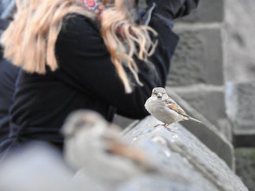 คลังภาพถ่ายฟรี ของ นก, โกรธ