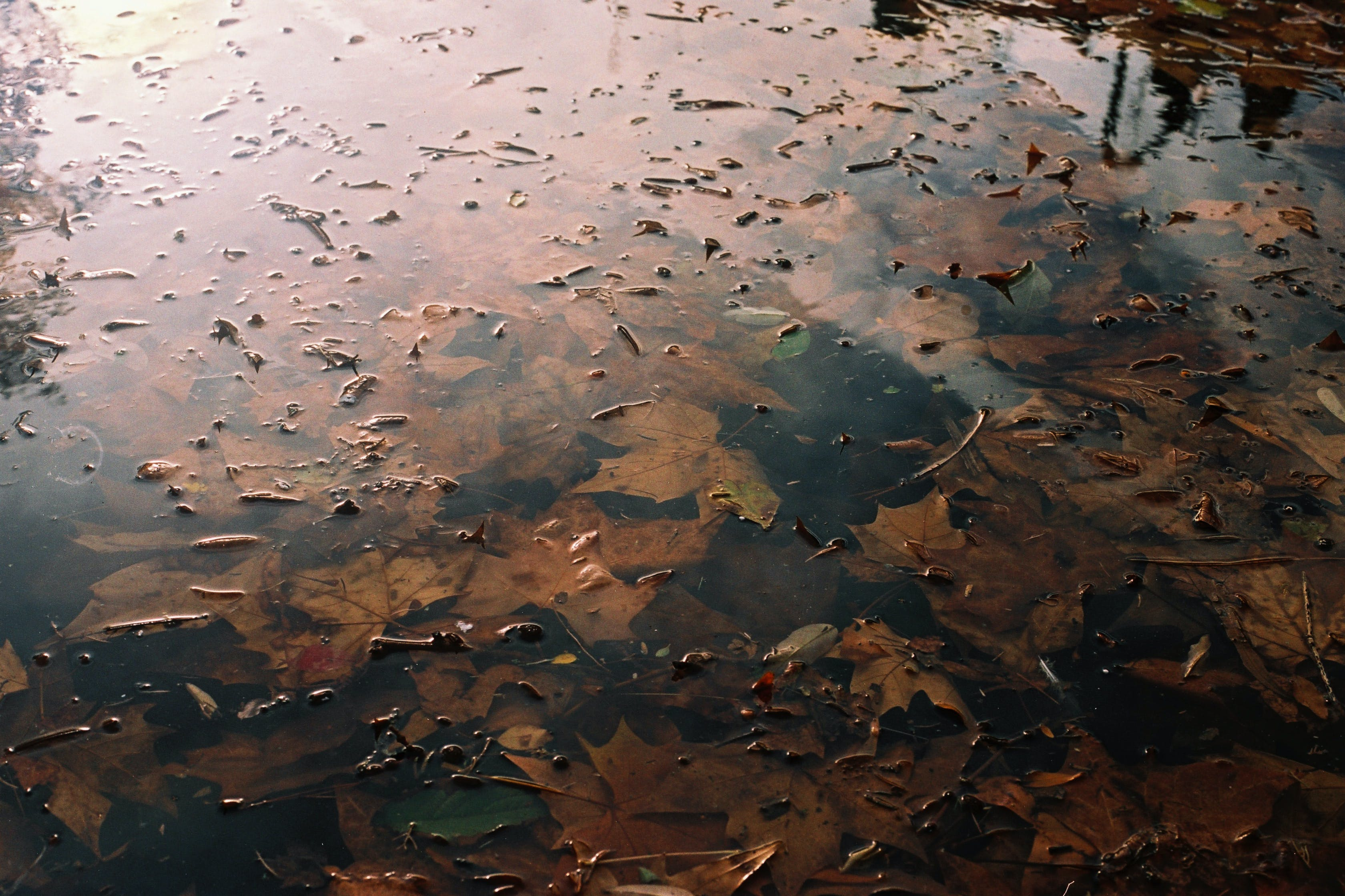 Free stock photo of autumn, leaves, water