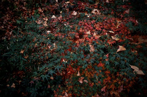 Foto profissional grátis de bordo, folhas de outono