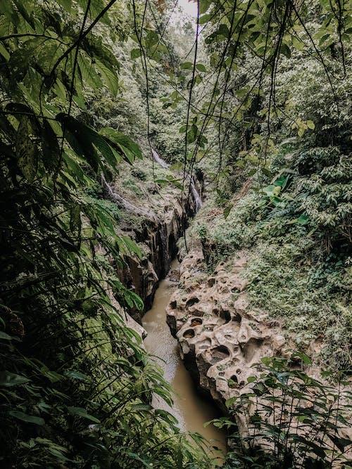 Free stock photo of bali, bali waterfall, beauty in nature, jungle
