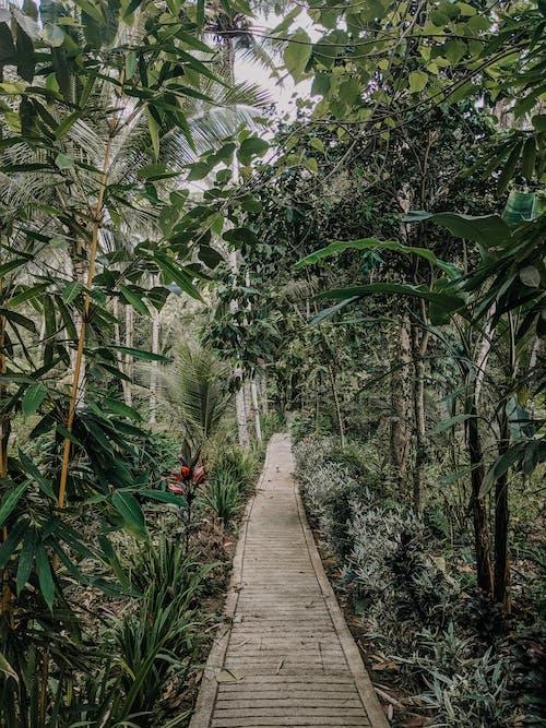 Zdjęcie ścieżki Obok Drzew