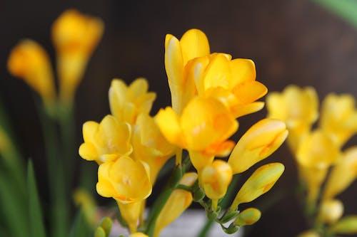 꽃, 노란 수 선화의 무료 스톡 사진