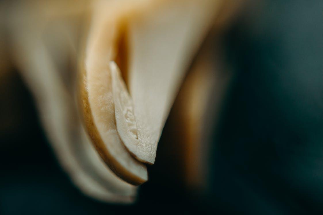barva, hloubka ostrosti, houby