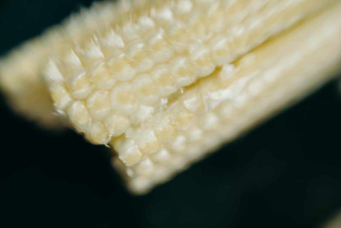 黃玉米在關閉攝影