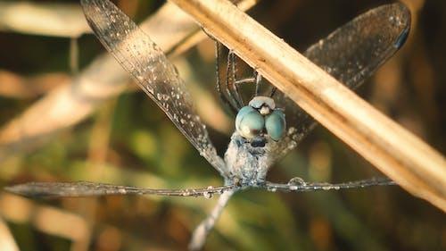 戶外, 户外摄影, 特寫, 蜻蜓摄影 的 免费素材照片