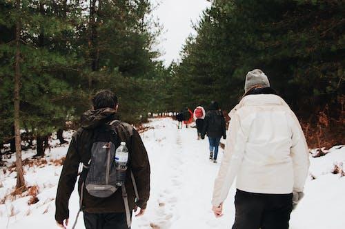 걷고 있는, 걷기, 고요한, 꽁꽁 언의 무료 스톡 사진