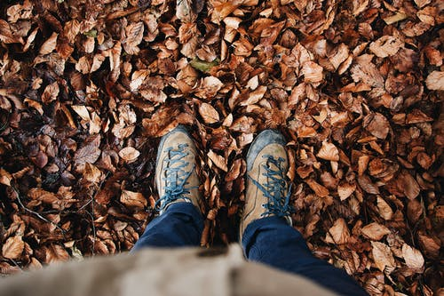 Gratis lagerfoto af blade, efterår, falde, fodtøj