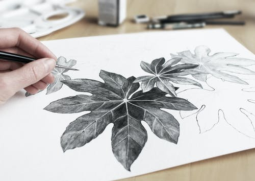 Person Drawing Leaves Using A Pencil