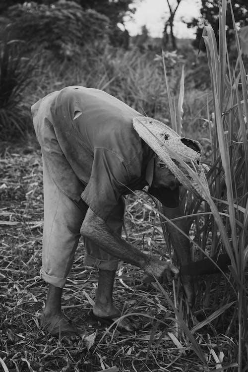 Photos gratuites de agriculteur, agriculture, brésil, exploitation agricole