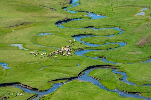 Free stock photo of animal, green, landscape, life