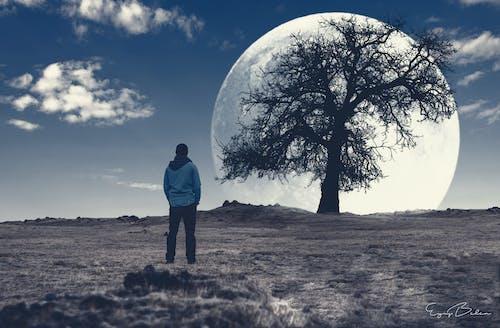 Безкоштовне стокове фото на тему «artphoto, дерево, дорога, життя»