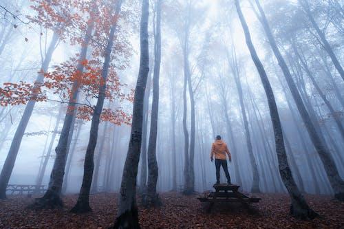 Free stock photo of autumn, eyupbelen, foggy, Foggy landscape