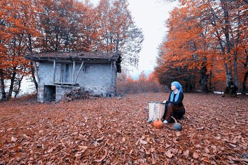 Free stock photo of autumn, autumn colors, autumn mood, eyupbelen