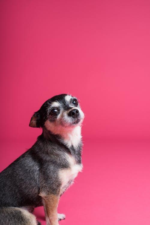 かわいらしい, ペット, 動物, 可愛いの無料の写真素材