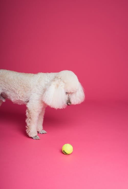 Dog in Front of Green Ball