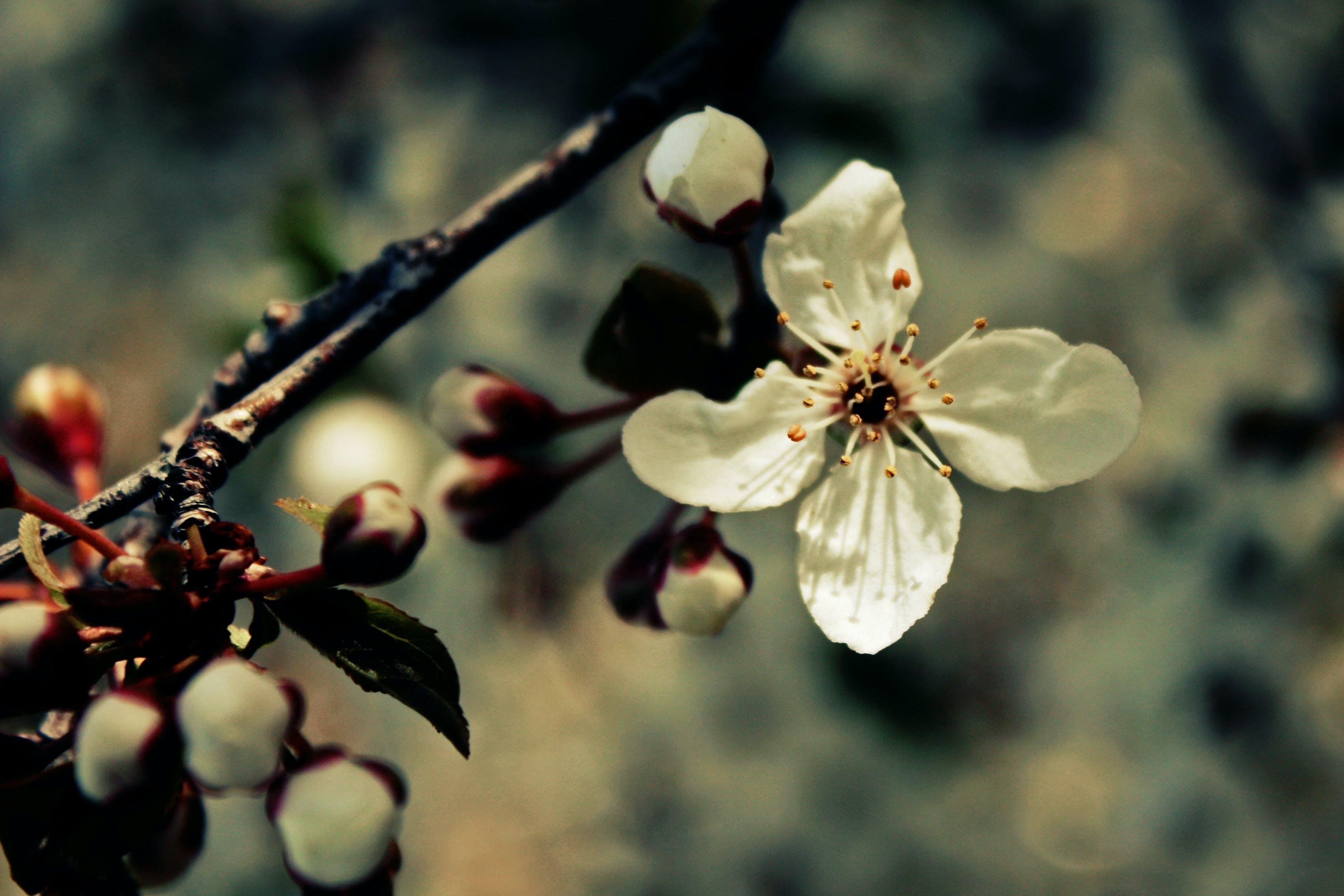 Ingyenes stockfotó növényvilág, természet, virág, virágos témában