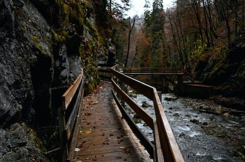 Ingyenes stockfotó erdő, fák erdő, hegyek, hegyi sziklák témában