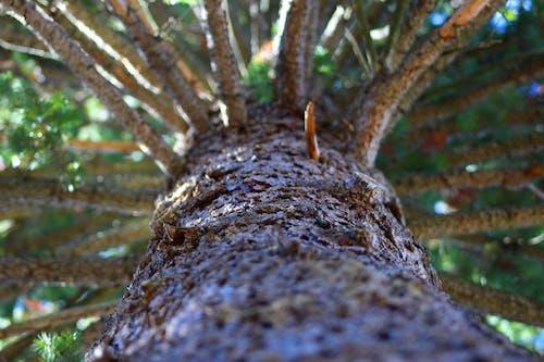 Gratis stockfoto met boom, buiten fotografie, den, natuur