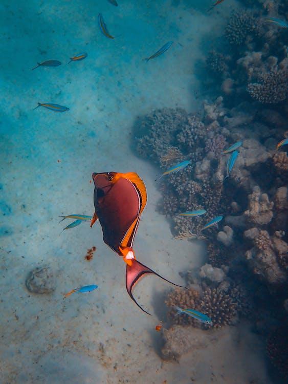 Orange Fish in Ocean